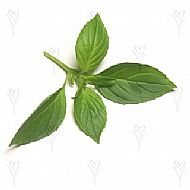 Basil, Lemon (A)