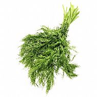Fennel, Common (P)