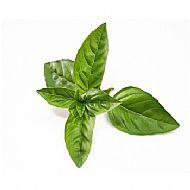 Basil, Lime (A)