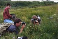 Photographing an orchid on Cumbrae - 1990