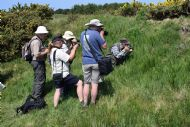Members photographing a Small Blue butterfly