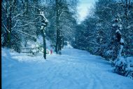 Wooded Middle Walk in Winter