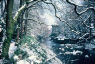 Wooded River Walk in Winter