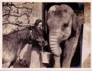 Elephant and Pony at Chessington