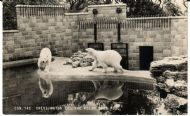 POLAR BEAR ENCLOSURE 1960's