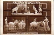 Emily's Ponies