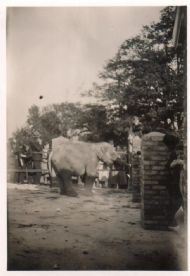 Elephant Being Fed.