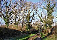 Bridle Lane