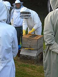 Opening up the Commercial hive - successful outcome!