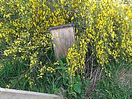 This once was a duck nesting box.