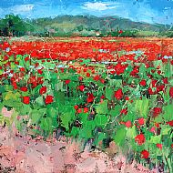 Poppies - Provence