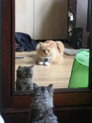 Milly admiring herself