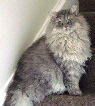 Moosh aged 7 months