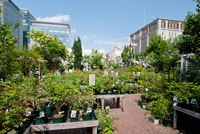 Roof gardens in retail not a new idea – but they continue to evolve