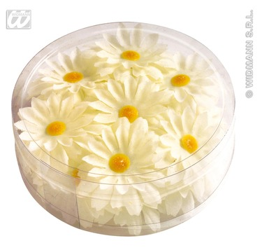 Decorative Daisy Flowers