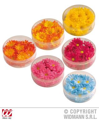 Decorative Coloured Daisy Flowers