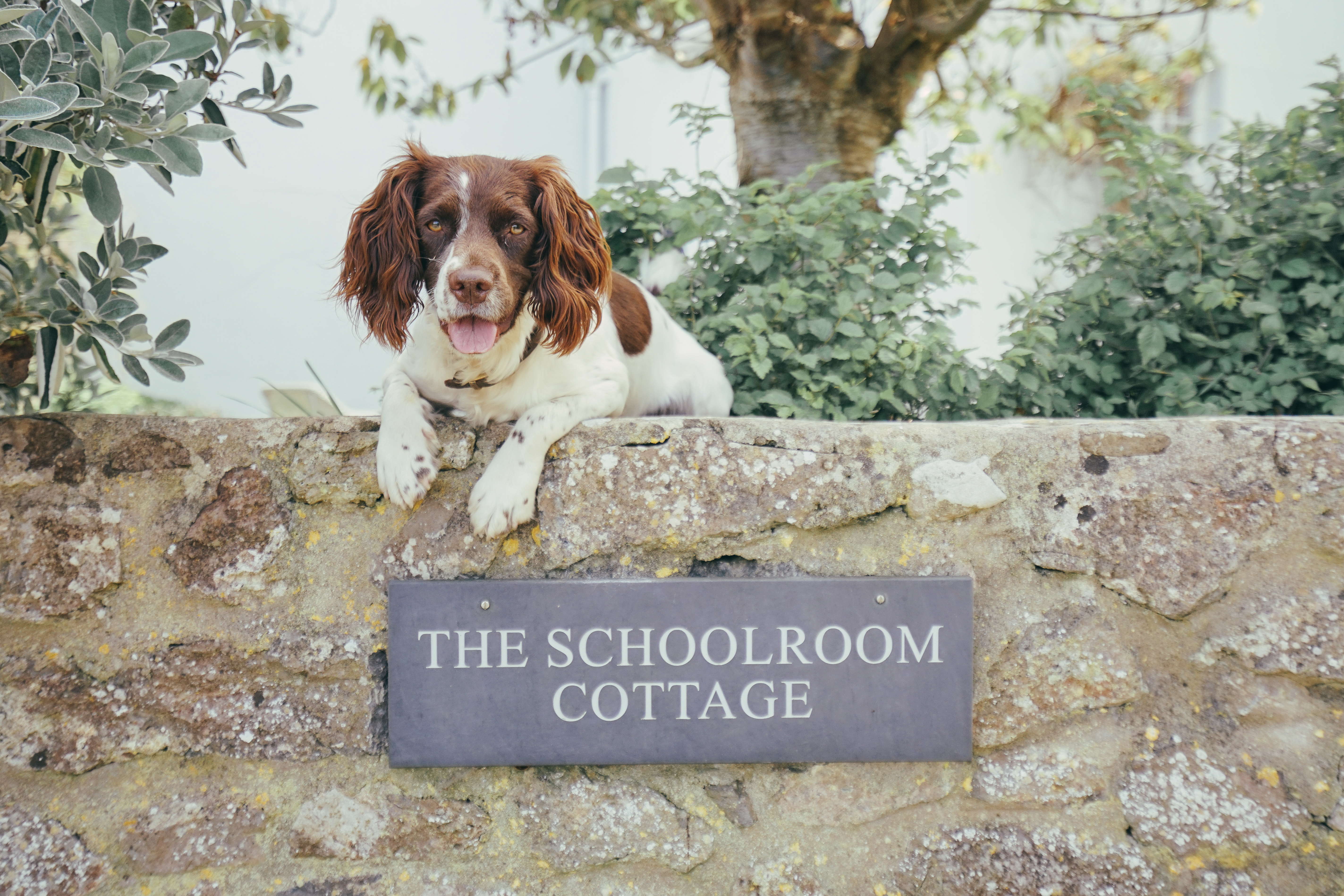 The Schoolroom Cottage - Gallery
