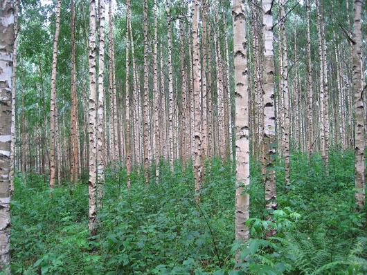 Haltijat: (y 2.) Los espíritus de los árboles y el espíritu de la luna en el Kalevala