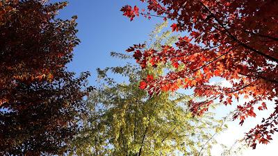 El solitario en otoño