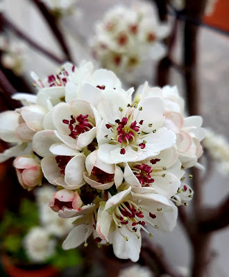 Primavera, según Schumann