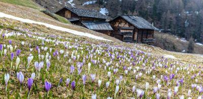 Aggiornamento da Val Senales - Schanlstal