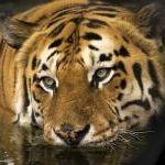 Image de profil de Bajoka
