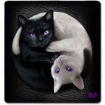 Image de profil de Nycolas