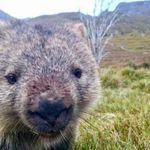 Image de profil de Silky Wombat