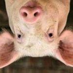 Image de profil de charcolonlon