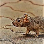 Image de profil de Le Rat