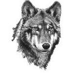 Image de profil de Morien