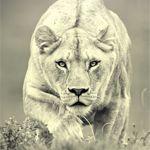 Image de profil de zangor
