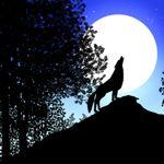 Image de profil de lune2005
