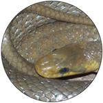 Image de profil de Vis9vies