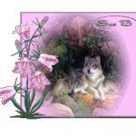 Image de profil de Maud Ancelet