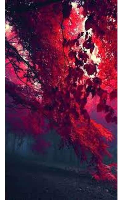 Image de couverture de Un arbre pour la vie