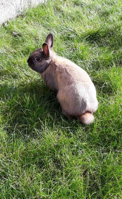 Image de couverture de Marcel le lapin !