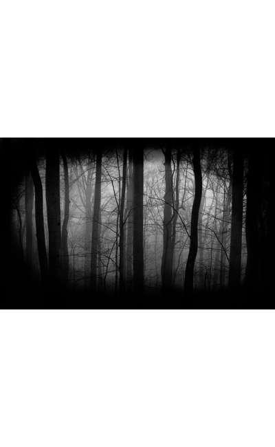 Image de couverture de Nocturne