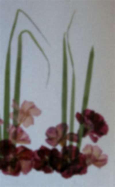 Image de couverture de Fleurs pressées
