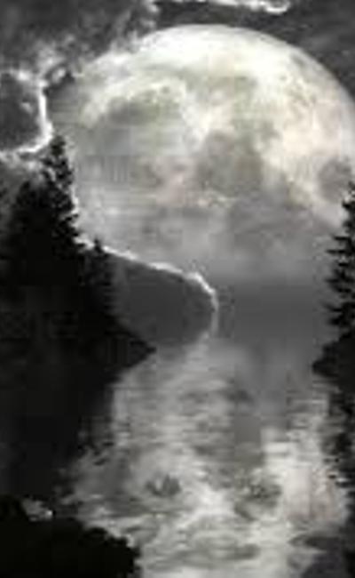 Image de couverture de Le rêve d'un arbre -