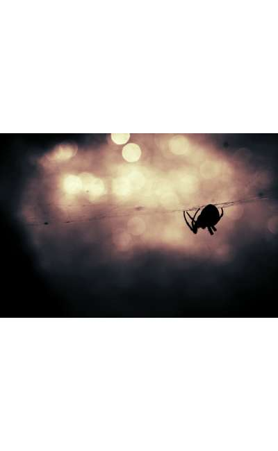 Image de couverture de Petite Araignée