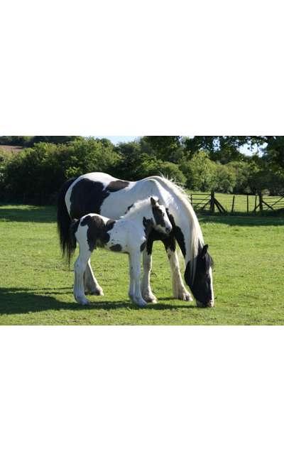 Image de couverture de Et si on parlait de...chevaux !
