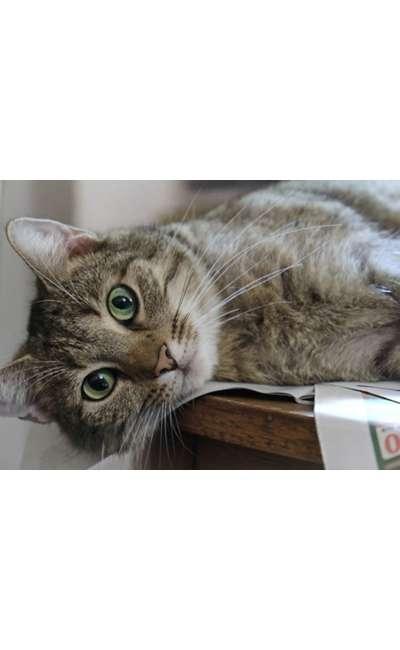 Image de couverture de Le chat