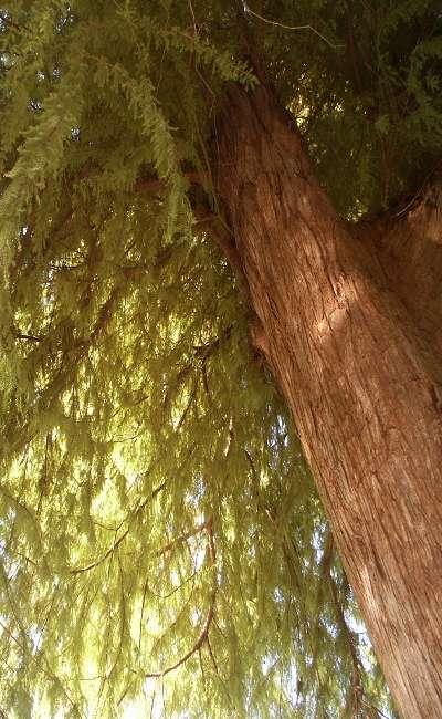 Image de couverture de Il était un arbre...