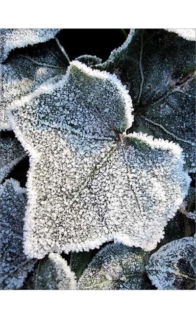Image de couverture de L'instant gelé