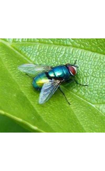 Image de couverture de Saleté de mouche verte