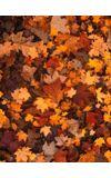 Image de couverture de Les automnes avec toi