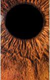 Image de couverture de Lass Asshain, le poids du regard