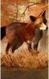 Image de couverture de Dans l'œil du renard