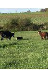 Image de couverture de Ma Vie d'Agricultrice {Terminé}